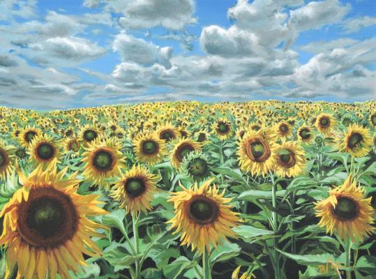 floarea-soarelui2009
